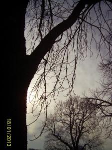 Januar-Spaziergang