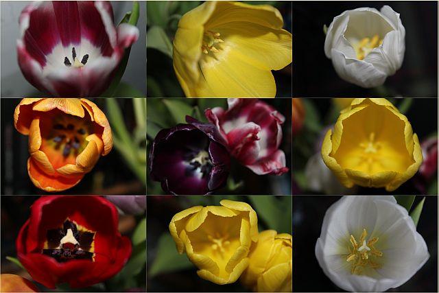 Tulpenliebe_Mosaik